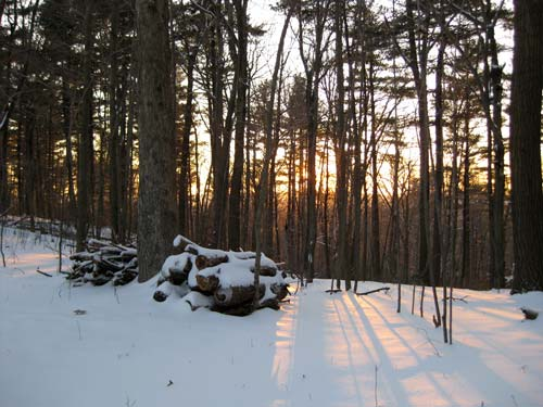 [snowy woods at sunset]
