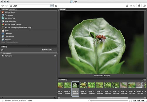 [using Adobe Bridge for image processing]
